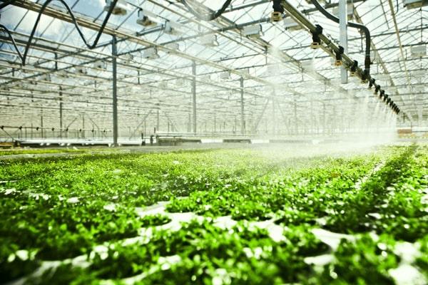 恒美农药残留检测仪走进寿光市蔬菜基地